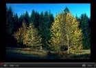 Temperate Forests | Recurso educativo 47687