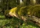 Poland/Bialowieza: primeval forest seeking for preservation | Recurso educativo 4065