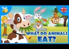 Video about carnivores, herbivores and omnivores | Recurso educativo 768321